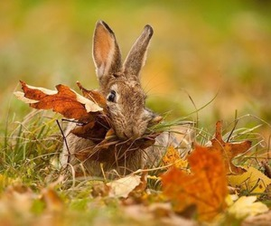 autumn, bunny, and rabbit image