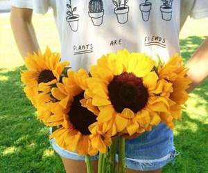 sunflower, flowers, and plants image
