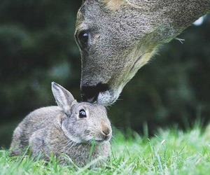 deer and rabbit image