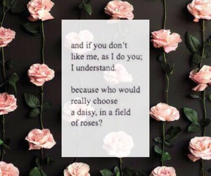 quotes, rose, and daisy image