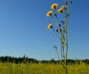 flowers and maisema image