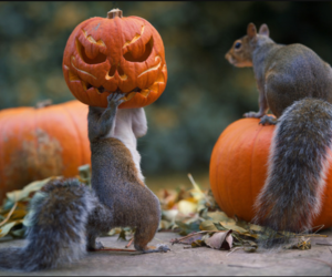 Halloween, squirrel, and pumpkin image