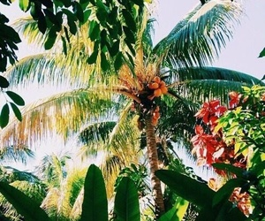 summer, tropical, and palm trees image