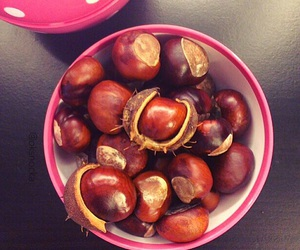 autumn, chestnut, and chestnuts image