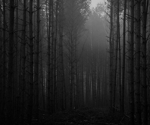black and white, forest, and dark image
