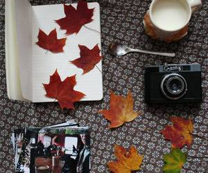 autumn, leaves, and photos image