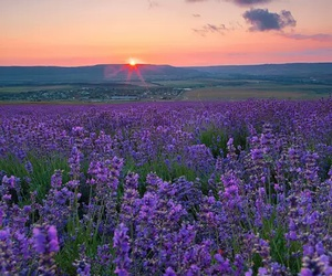 beautiful, lavender, and city image
