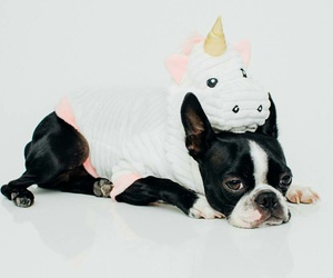 cute puppies, dog costumes, and unicorn costume image