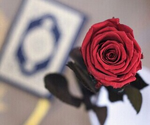 quran, red, and rose image