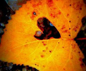 autumn, color, and fall image