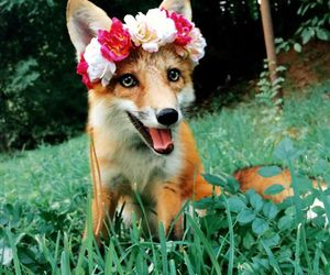 fox, flowers, and animal image
