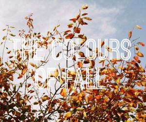 colours and fall image