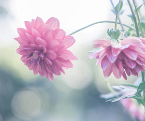 colors, pastel, and flowers image