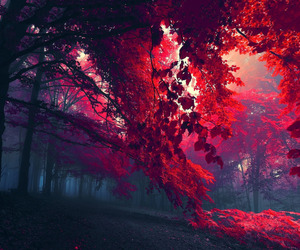 red, tree, and forest image