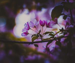 amazing, nature, and purple image