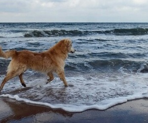 blue, dog, and sea image