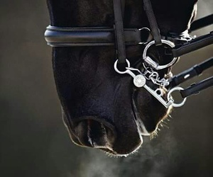 horse, black, and animal image