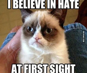 cat, hate, and funny image