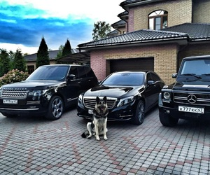dog, cars, and range rover image