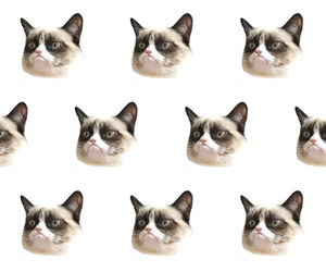 77 Images About Grumpy Cat 3 On We Heart It