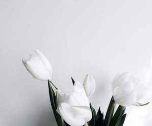 clean, white, and rose image