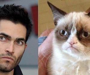 derek, teen wolf, and grumpy cat image