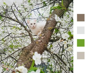 cat, color, and spring image