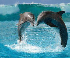 love and dolphin image