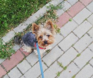 dog, me, and sweet image