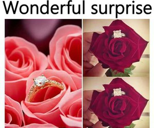 flowers, ring, and rose image