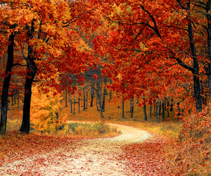 autumn, country, and road image