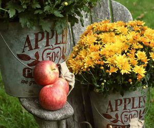 apples, autumn, and tins image