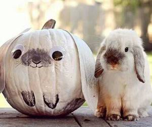 cute, bunny, and pumpkin image