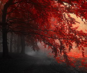 autumn, beautiful, and mist image