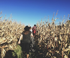 corn, fall, and october image