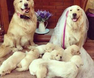 dog, family, and animal image