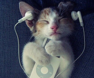 cat, music, and cute image