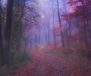 forest and grunge image