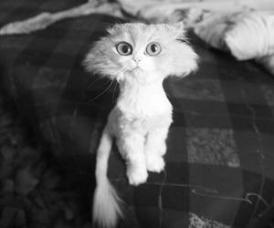 cat, funny, and black and white image