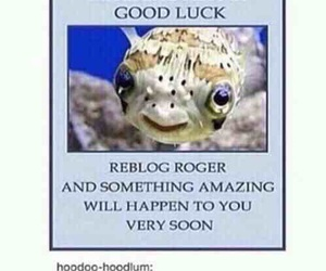 funny, repost, and luck image