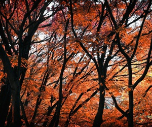 autumn and tree image