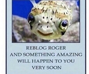 fish, luck, and roger image