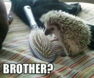 funny, brothers, and hedgehog image