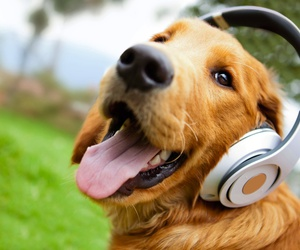 dog, music, and animal image