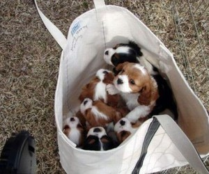 animals, bag, and puppy image