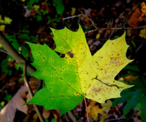 fall, photography, and yellow leave image