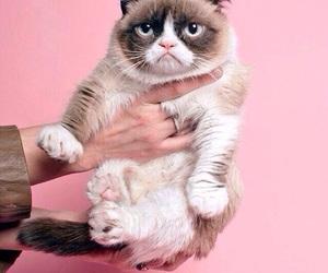 Prada, cat, and pink image