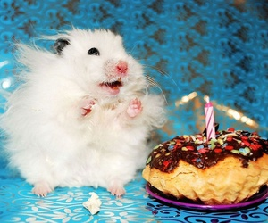 hamster, cute, and birthday image