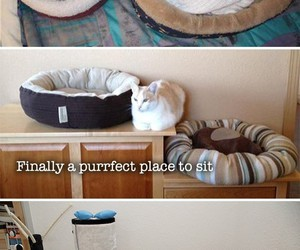 bed, cat, and funny image