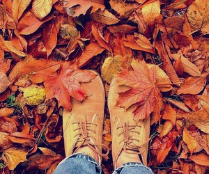 autumn, colors, and day image